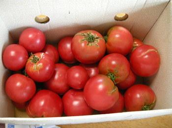 最後のトマト化も.JPG