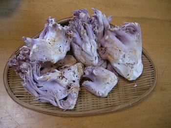 紫ほうき茸1.JPG